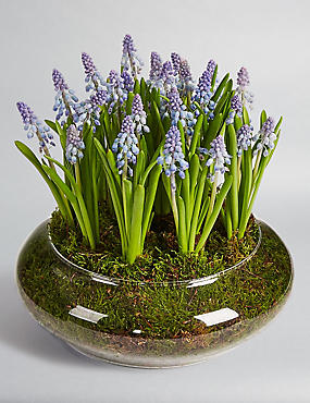 Muscari Glass bowl